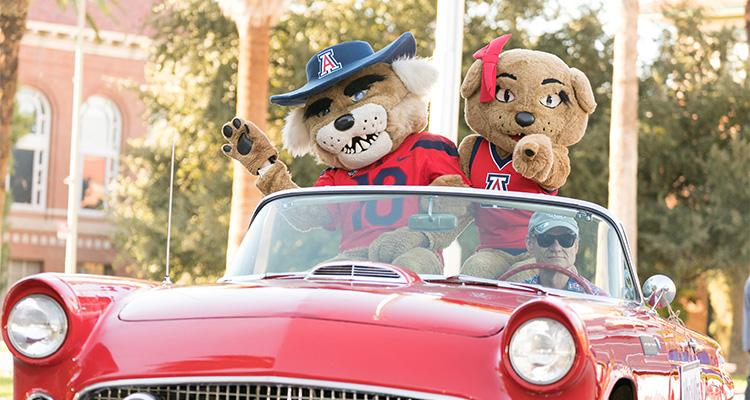 Wilbur and Wilma Wildcat, the University of Arizona mascots, ride in a classic convertible during the 2018 Homecoming parade